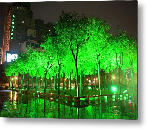 Outdoors Metal Print featuring the photograph Green Illuminated Trees, China by Shanna Baker
