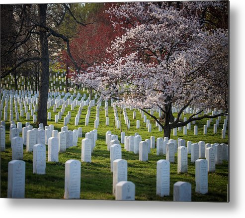 Blossoms Metal Print featuring the photograph Spring at Arlington by Fred DeSousa