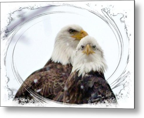 Bald Eagle Metal Print featuring the photograph We Two by Rennae Christman