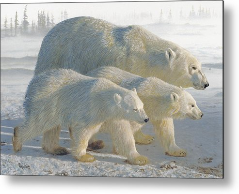 Polar Bear Metal Print featuring the drawing A Chill Wind by Brent Ander