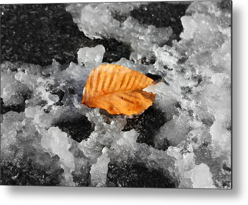 Snow Metal Print featuring the photograph After the Snow by Candice Trimble