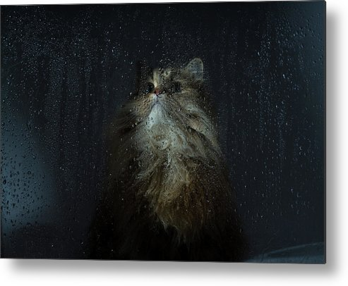 Pets Metal Print featuring the photograph Cat By Rainy Window by Benjamin Torode