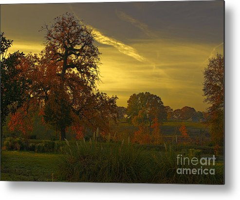Sunset Metal Print featuring the photograph Fall Light by Linda Ebarb