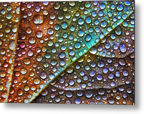 Macro Metal Print featuring the photograph Leaf 9482 by Damon Clarke