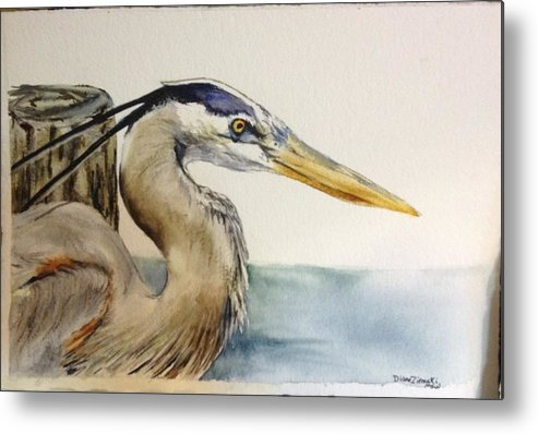 Watercolor Metal Print featuring the painting Mr herrin by Diane Ziemski