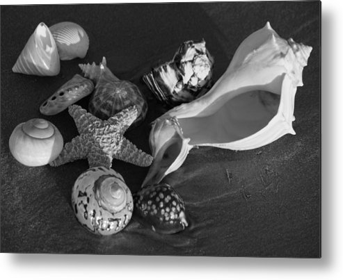 Black And White Metal Print featuring the photograph Seashells II In Black And White by Suzanne Gaff