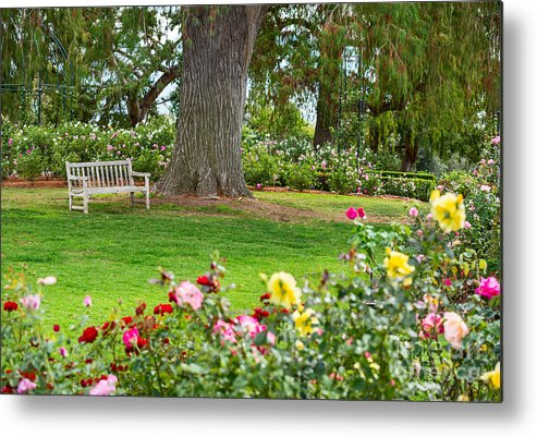 Take A Seat Beautiful Rose Garden Of The Huntington Library Metal Print By Jamie Pham
