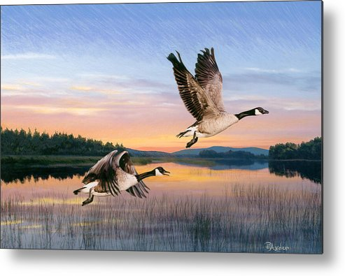 Geese Metal Print featuring the drawing Taking Flight by Brent Ander