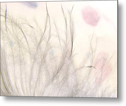 Feather Metal Print featuring the photograph Tickles by John Poon