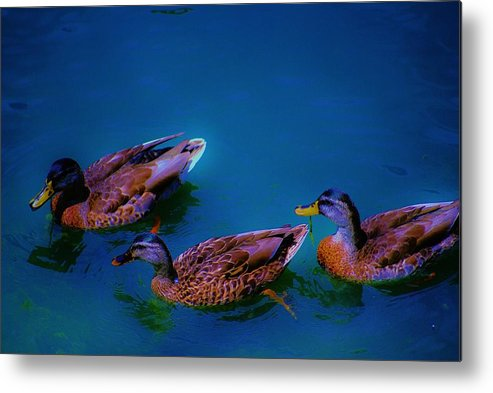 Wildlife Metal Print featuring the photograph Chiling by Lorenzo Roberts