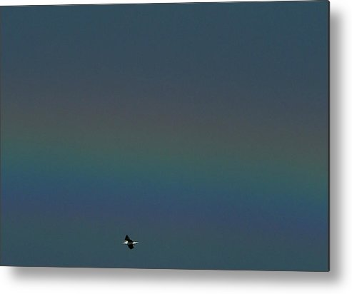 Fuzzy Rainbow And Gull Metal Print featuring the photograph Flight Spectrum by Baato