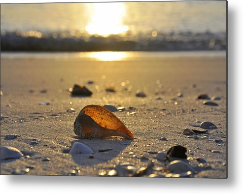 Sea Shell Metal Print featuring the photograph Seashells and Sunshine by Christine Stonebridge