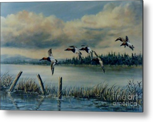 Flock Of Canvasback Ducks Metal Print featuring the painting Canvasbacks Over Lake Earl by Lynne Parker