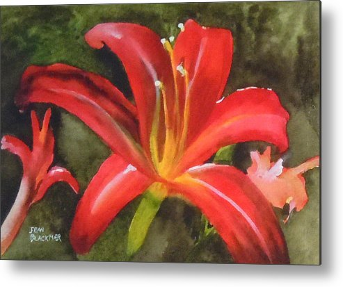 Red Metal Print featuring the painting Daylily Study IV by Jean Blackmer