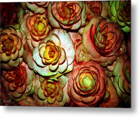 Roses Metal Print featuring the photograph Flowers by Ruben Flanagan