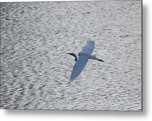Flight Metal Print featuring the photograph Flying Over Water by Peter McIntosh