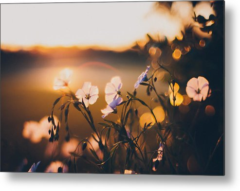 Garden Metal Print featuring the photograph In the Garden by Tracy Jade
