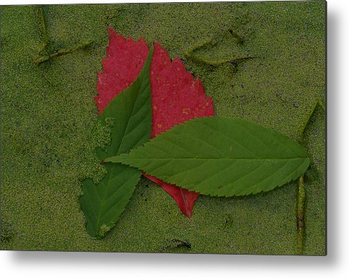 Leave Metal Print featuring the photograph Leaf in the Swamp by Andreas Freund