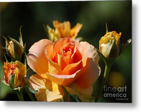 Flowers Metal Print featuring the photograph O range-ment by Larry Keahey