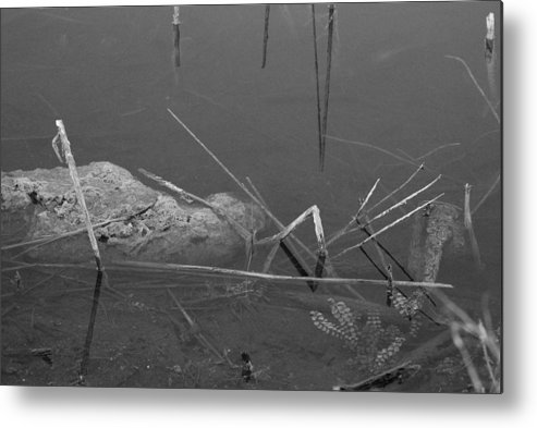 Black And White Metal Print featuring the photograph Spider In Water by Rob Hans