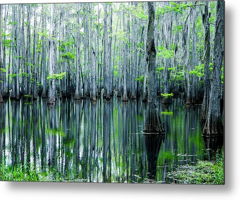 Algae Metal Print featuring the photograph Swamp in Louisiana by Ester McGuire
