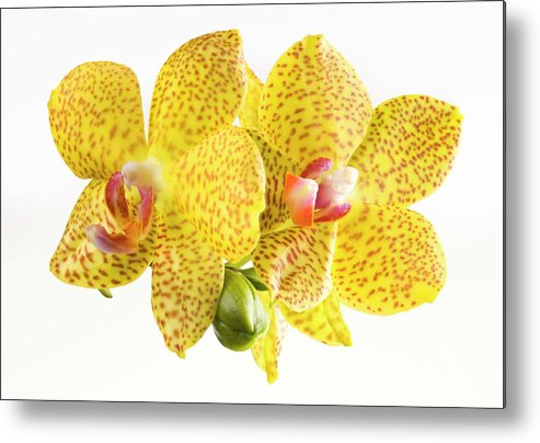 Thank You Metal Print featuring the photograph Beautiful Yellow Orchid On White by Digihelion