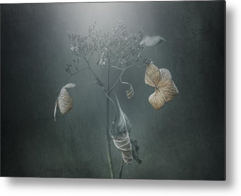 Metal Print featuring the photograph Withe Hydrangea by Takashi Suzuki