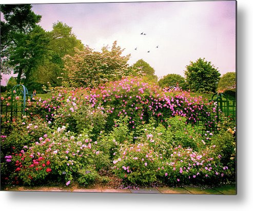 New York Botanical Garden Metal Print featuring the photograph Rose Garden Greeting by Jessica Jenney