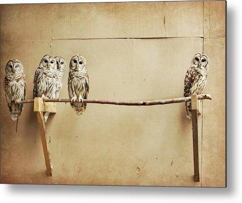 Scranton Metal Print featuring the photograph Baby Barred Owls by Tara Reifenheiser