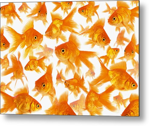 Orange Color Metal Print featuring the photograph Background Showing A Large Group Of by Cocoon