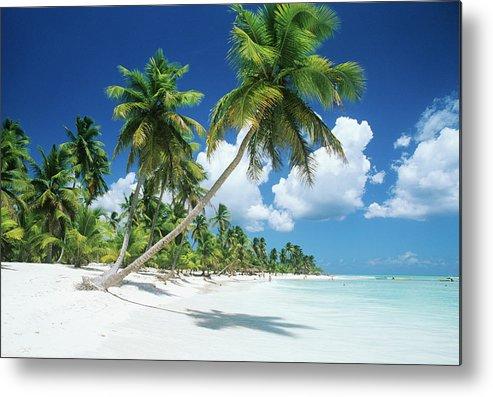 Scenics Metal Print featuring the photograph Dominican Republic, Saona Island, Palm by Stefano Stefani