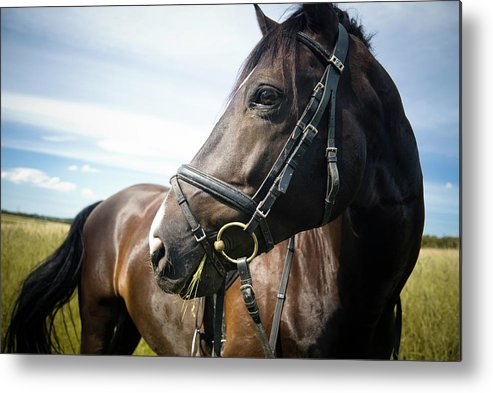 Horse Metal Print featuring the photograph Dont Look Back by Pixalot
