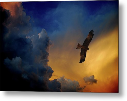Animal Themes Metal Print featuring the photograph Eagle Over The Top by Gopan G Nair