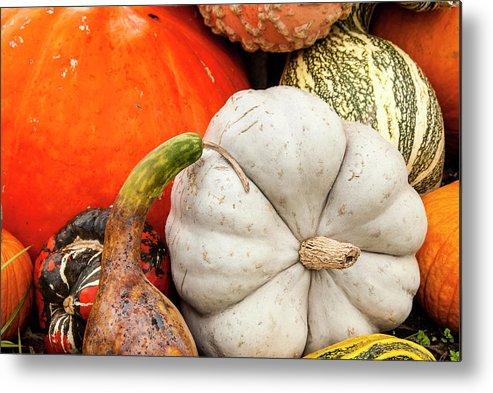 Season Metal Print featuring the photograph Fall Season Squash And Pumpkins by M Timothy O'keefe