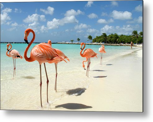 Shadow Metal Print featuring the photograph Flamingos On The Beach by Vanwyckexpress