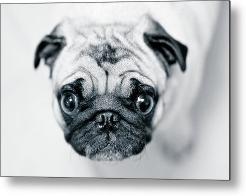 Pets Metal Print featuring the photograph Just Enough by Eddy Joaquim