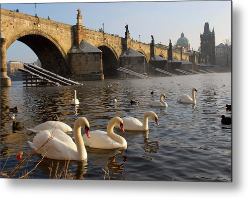 Arch Metal Print featuring the photograph Swans And Charles Bridge by Dibrova