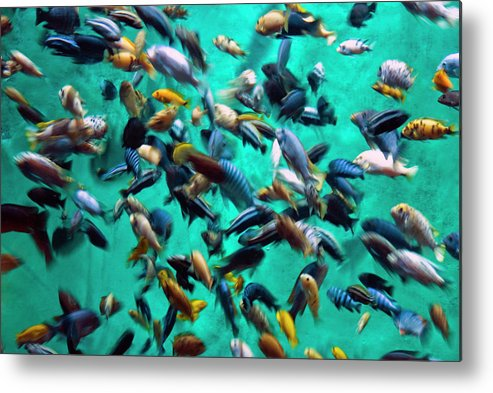 Underwater Metal Print featuring the photograph Various Multi-colored African Fish by By Ken Ilio