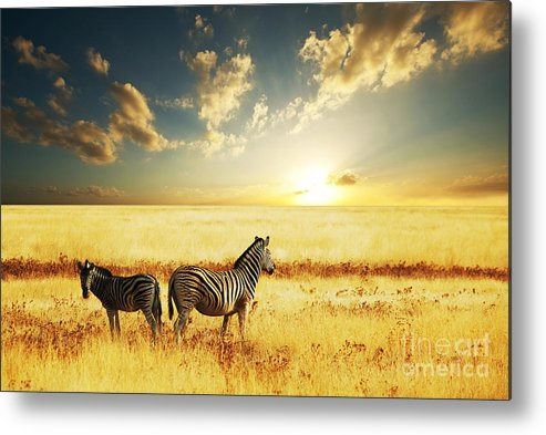 Zebra Metal Print featuring the photograph Zebras At Sunset by Galyna Andrushko