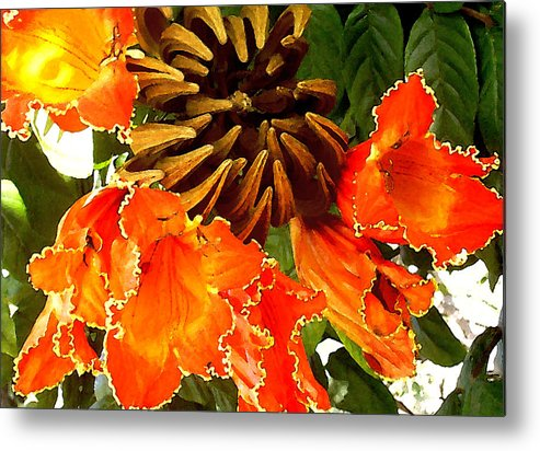 Hawaii Iphone Cases Metal Print featuring the photograph African Tulip Tree by James Temple