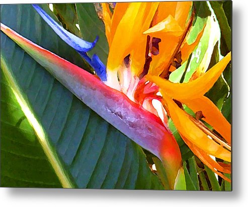 Hawaii Greeting Cards Metal Print featuring the photograph Bird of Paradise by James Temple