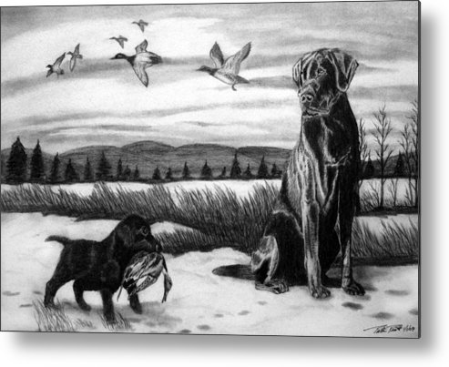 In Training Metal Print featuring the drawing In Training by Peter Piatt