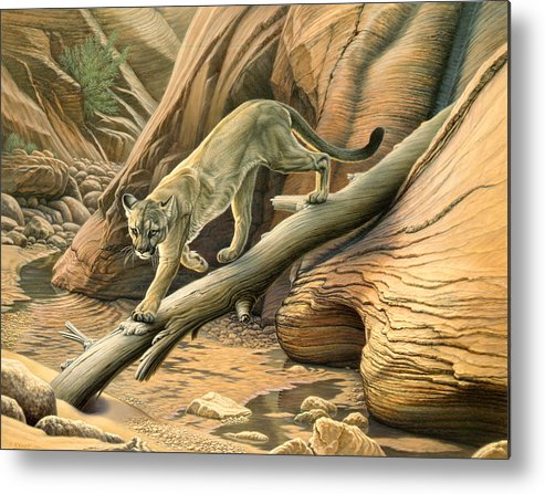 Wildlife Metal Print featuring the painting Canyon Hunter - Cougar by Paul Krapf