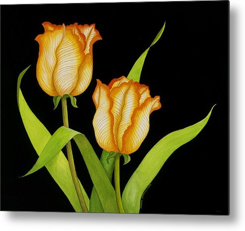 Two Orange-yellow Tulips Posing On A Black Background Metal Print featuring the painting Posing Tulips by Carol Sabo