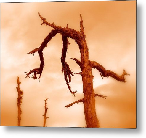 Tree Metal Print featuring the photograph Retired by Miron Abramovici