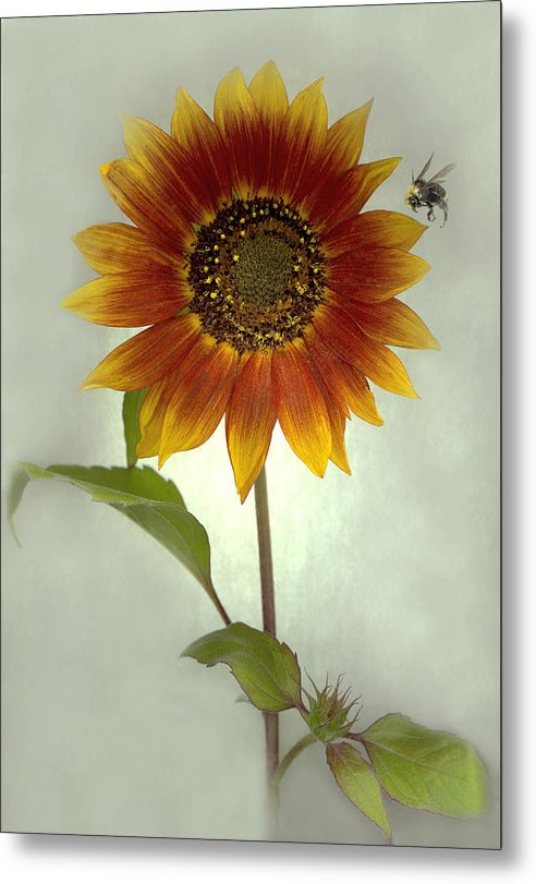 Sunflower Metal Print featuring the mixed media Sunflower And Bee by Sandi F Hutchins