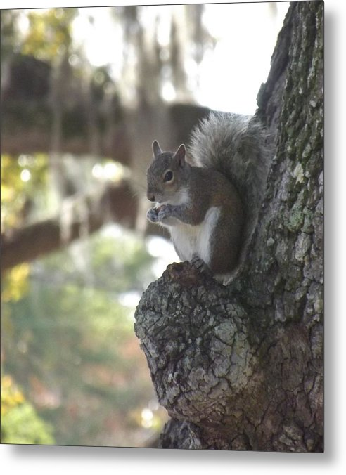 Wildlife Metal Print featuring the photograph Breakfast Perch by Lori-Anne Fay
