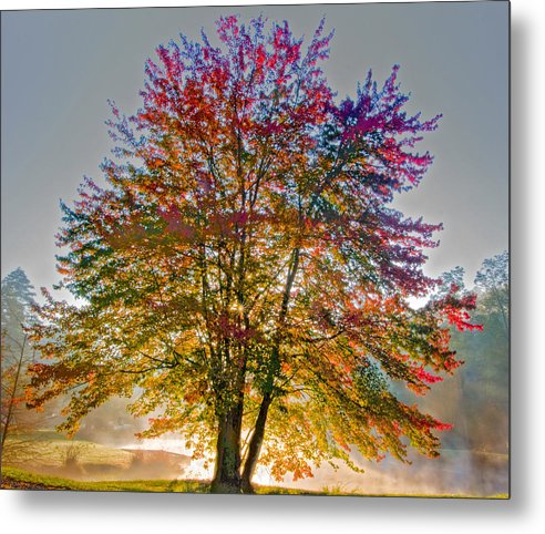Maple Metal Print featuring the photograph Backlit Maple In Autumn's Light by Rob Travis