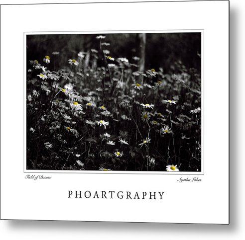 Flowers Metal Print featuring the photograph Field Of Daisies by Ayesha Lakes