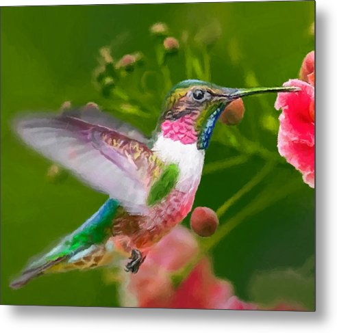 Hummingbird Metal Print featuring the painting Hummingbird And Flower Painting by Dr Bob Johnston